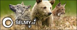 Šelmy.cz - Ochrana velkých šelem v ČR - Projekt Hnutí DUHA Olomouc (Recovery of large carnivores in Czech republic)
